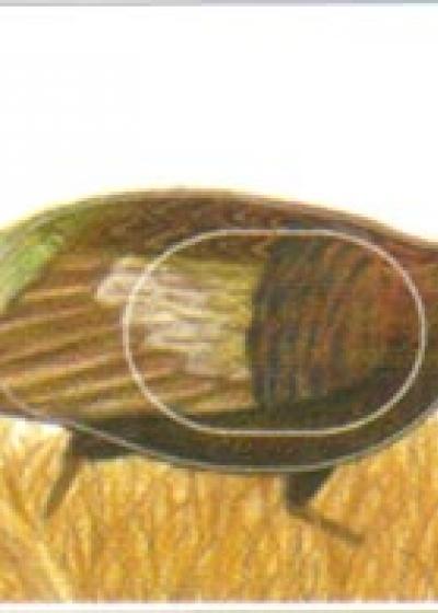 Pheasant, Group 3