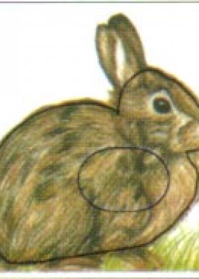 Rabbit, Group 4