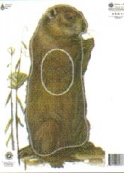 Woodchuck, Group 4